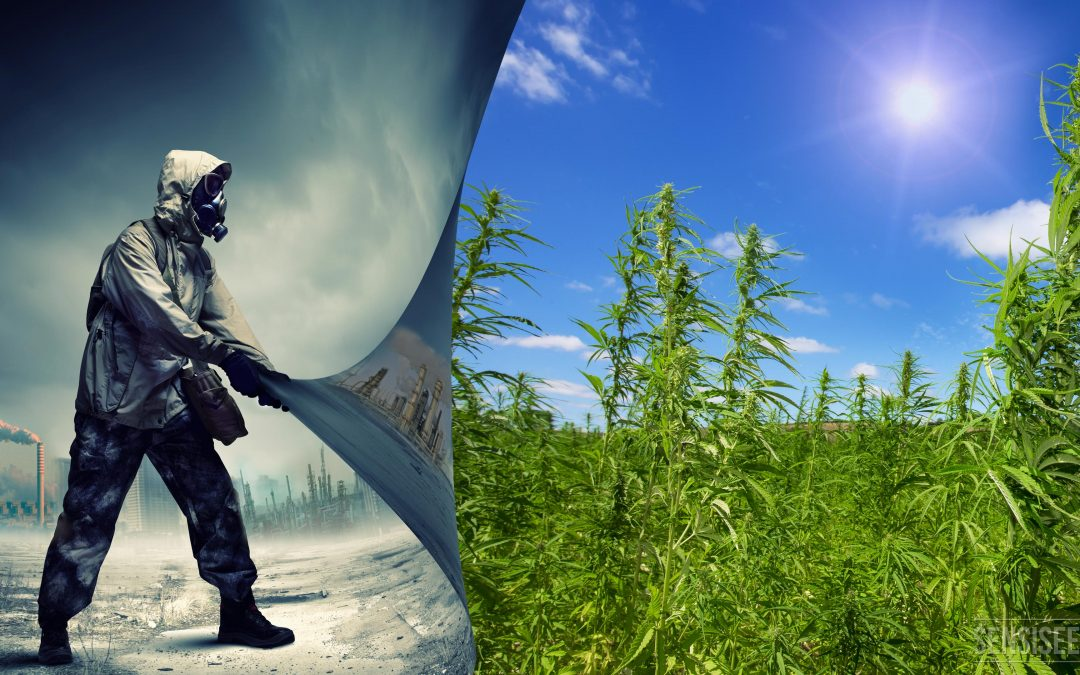 Can Hemp Fuel Replace Petroleum Fuel?